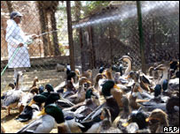 An Egyptian zoo keeper sprays disinfectant in duck cages at the Giza zoo, south of Cairo (file image)
