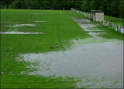 The ducks on the pitch