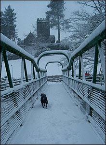 Burtie the dog in the snow in Rhayader, Powys