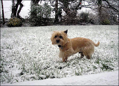 Dog in snow in Llanelli. Photo: Anthony Lewis