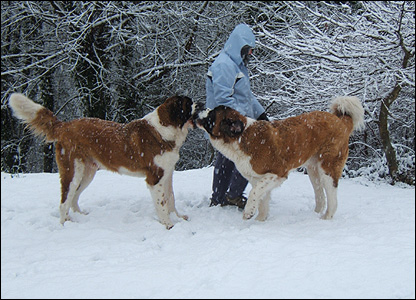 Two dogs in Upper Cwmtwrch. Photo: Andrew Thomas