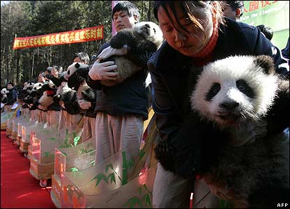 Panda Xi Dou (R) is held by a feeder during a ceremony in Sichuan province