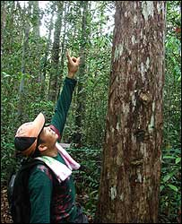 Pak Alim in the forest