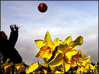 A child playing in a daffodil field in Noordwijkerhout