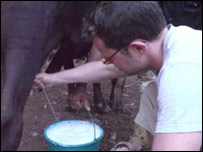 Stefan milking a cow