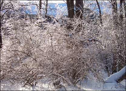 Ice on tree branches in Ohio: photo from Scot Matkovich