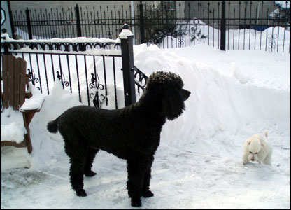 Dogs in the snow in Ontario: photo from Lina Moore