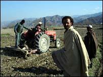 Poppy eradication in Nangarhar province