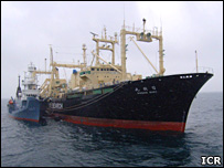 The Nisshin Maru ship (ICR)
