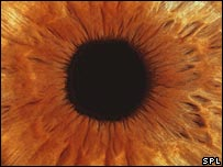 The iris in the eye