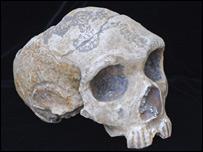 Calavera masculina de Neanderthal recuperada en Gibraltar (Foto: Museo de Gibraltar)