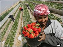Palestinian farmers near Beit Lahia