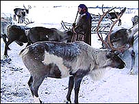 Nenet people with reindeer