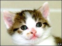"""""""Carbon Copy"""", el primer clon felino."""