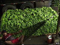 Bananas ready for shipment
