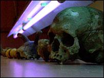 Neolithic skullls