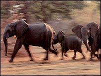 Elephants  Image: PNAS