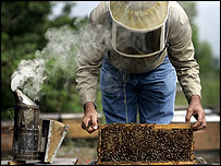 Mark McCoy works with his honey bees on February 15, 2007 in Loxahatchee, Florida   Image: Getty