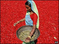 Woman working at an Indian chilli farm