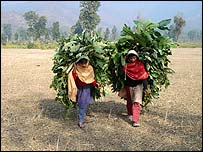 Nepal's indentured girls