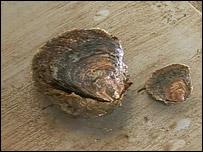 Oscar the oyster (left)