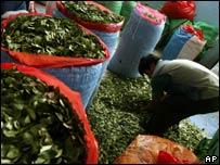 Hojas de coca en Bolivia