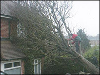 A tree on a house in Portslade