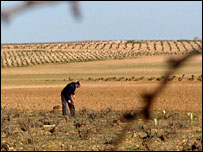 Angel Oliveros Zafra works on his farm near Toledo, Spain