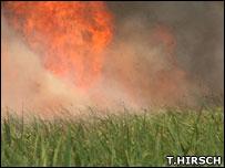 Sugarcane burning (Image: Tim Hirsch)
