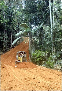 Road construction through a rainforest (Image: Richard Black)