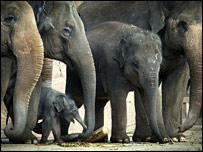 The tonnes of bushes will feed the elephants for three weeks
