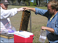 Nathan Rice and Dennis van Engelsdorp take samples from a hive