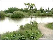 Bog Meadows