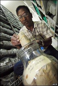 Scientist storing a rice sample (Image: AFP)
