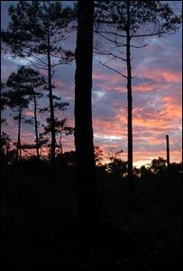 Bosques de Aquitania, Francia