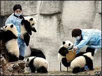 Pandas in captivity