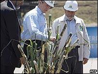 George Bush y Luiz Inacio Lula da Silva con planta de caña de azúcar.