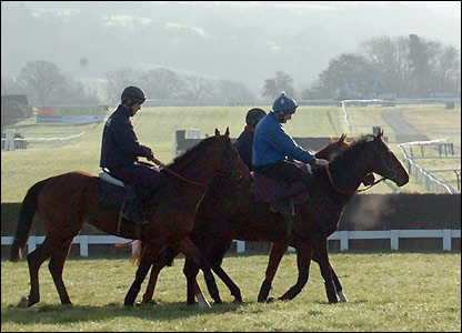 Horses are taken to the gallops