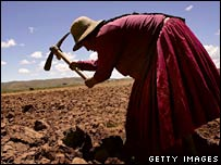 A Bolivian woman works in a field. File photo