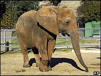 Elephant, AP