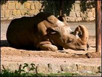 Rhino. Image: BBC