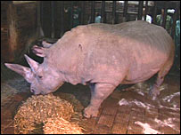 Rhino eating. Image: BBC