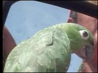 A bird being offered for sale on a Managua street