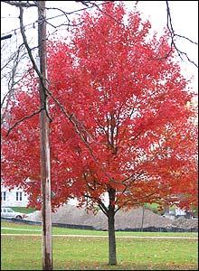 �rbol de hojas rojas en Vermont, Estados Unidos