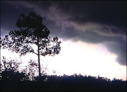 �rbol durante una tormenta