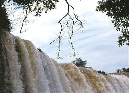 �rboles en las cataratas del Iguaz�