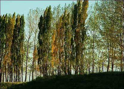 Árboles en Mendoza, Argentina