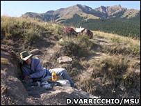 Digging at the Oryctodromeus site (David Varricchio/MSU)