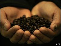 Manos de un agricultor de Honduras sosteniendo granos de café