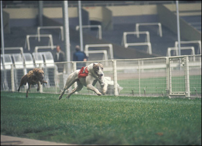 Greyhound racing at Wembley in 1972